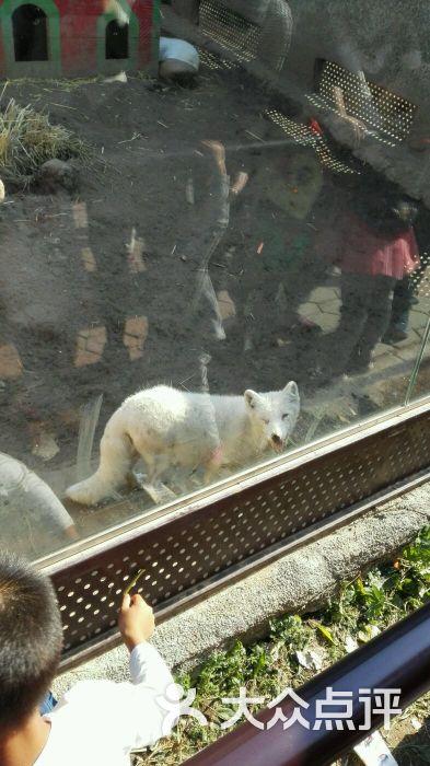 森林野生动物园-白狐图片-沈阳景点-大众点评网