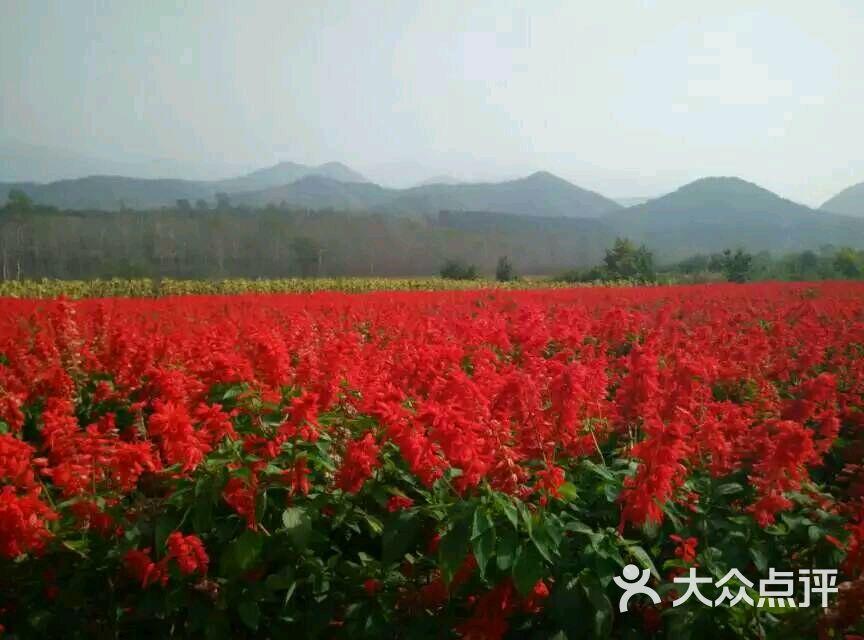 延庆县四海镇花海图片 - 第1张