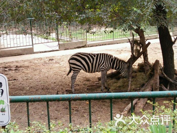 红山森林动物园图片 - 第11张