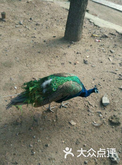 罗庄动物园-图片-临沂景点-大众点评网