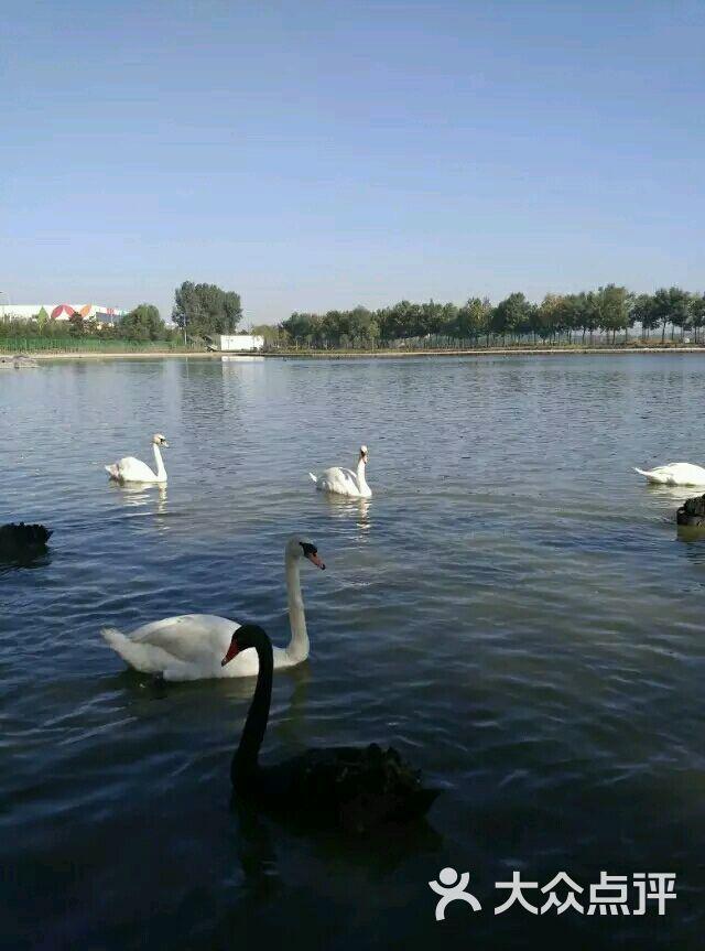 南湖生态风景区-图片-唐山景点-大众点评网