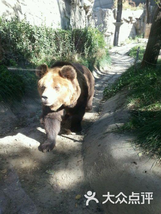 北京动物园-图片-北京景点-大众点评网