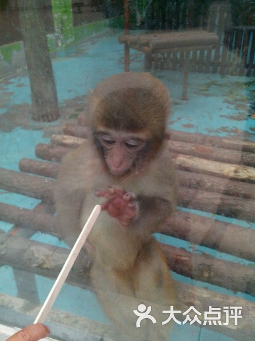 郑州动物园-图片-郑州景点-大众点评网